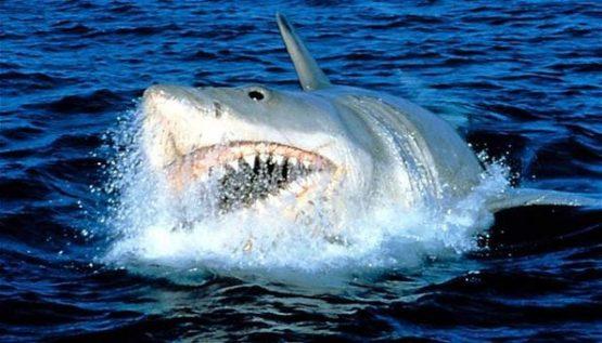 Τα ραντεβού με τους καρχαρίες